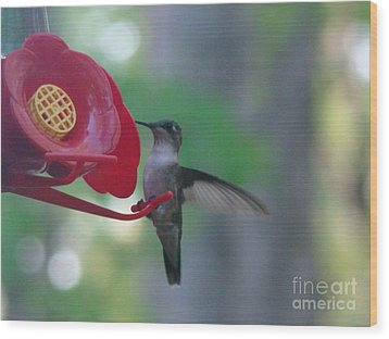 Hummingbird  Wood Print by Rand Herron