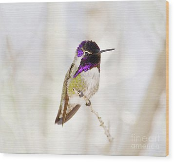 Hummingbird Wood Print by Rebecca Margraf