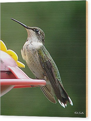 Wood Print featuring the photograph Hummingbird by Rick Friedle