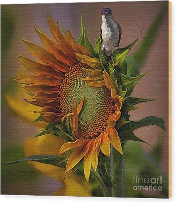 Hummingbird Sitting On Top Of The Sun Wood Print