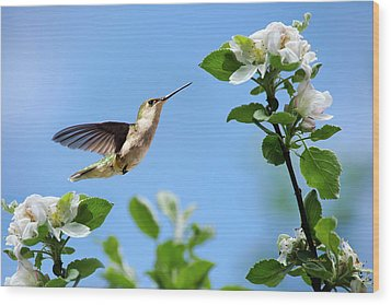 Hummingbird Springtime Wood Print by Christina Rollo