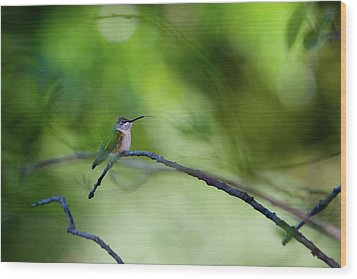 Hummingbird Sticks Out Tongue Wood Print