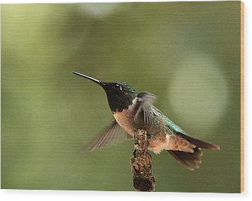 Hummingbird Take-off Wood Print by Sheila Brown