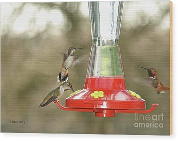 Hummingbird Trio Wood Print by Shari Nees