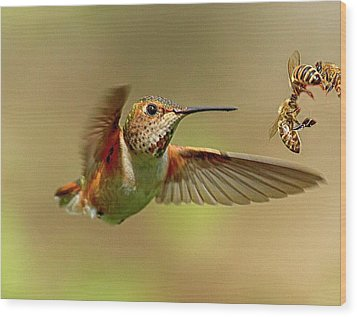 Hummingbird Vs. Bees Wood Print