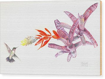 Hummingbird With Bromeliad Wood Print