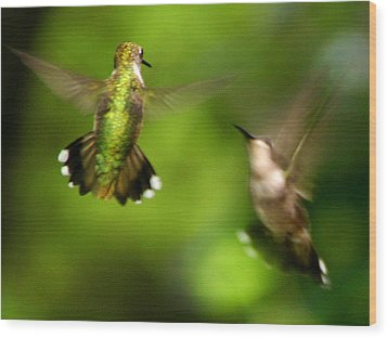 Hummingbirds - Fighting Wood Print by Fred Baird