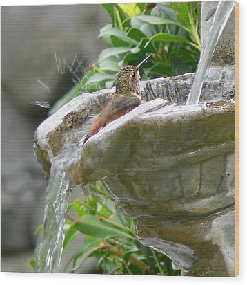 Hummingbirds Do Take Baths Wood Print by Jennie Marie Schell