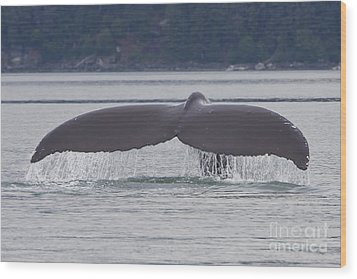 Humpback Dive Wood Print by Stan and Anne Foster