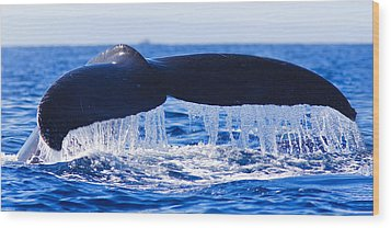 Humpback Fluke Wood Print
