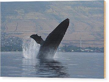 Humpback Whale Breach Wood Print by Jennifer Ancker