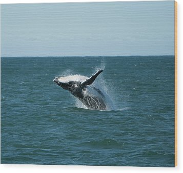 Humpback Whale Breaching Wood Print by Peter K Leung