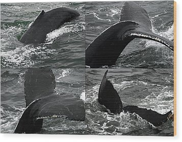 Humpback Whale Fluke Montage Wood Print by Robert Shard