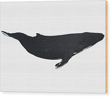 Humpback Whale Profile Wood Print by Corey Ford
