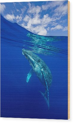 Humpback Whale With Clouds Wood Print