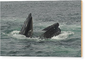 Hungry Humpback Wood Print by Rick Frost