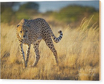 Hunting Cheetah Wood Print by Inge Johnsson