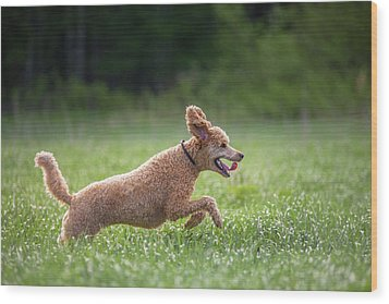 Hunting Dog Wood Print