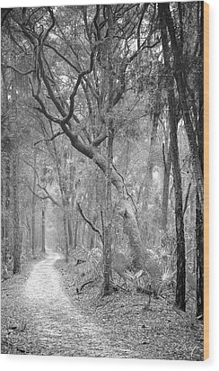 Hunting Island Path  Wood Print by Phill Doherty