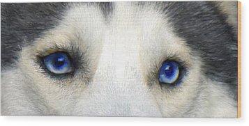 Husky Eyes Wood Print by Jane Schnetlage