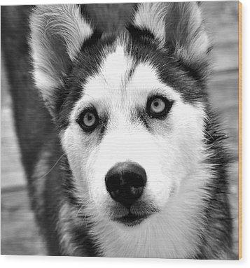 Husky Pup Wood Print by Sumit Mehndiratta