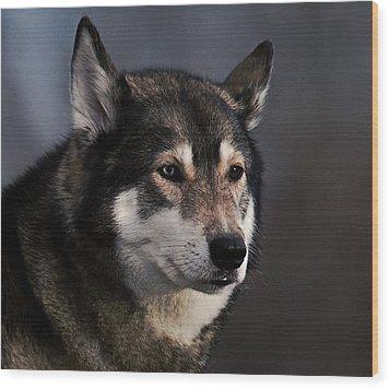 Husky Wood Print
