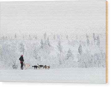 Wood Print featuring the photograph Husky Safari by Delphimages Photo Creations