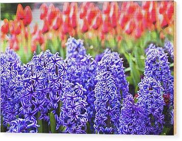 Hyacinth In Bloom Wood Print by Tamyra Ayles