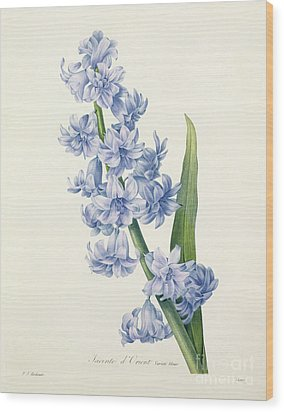 Hyacinth Wood Print by Pierre Joseph Redoute