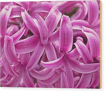 Wood Print featuring the photograph Hyacinth Pink Pearl by Rona Black
