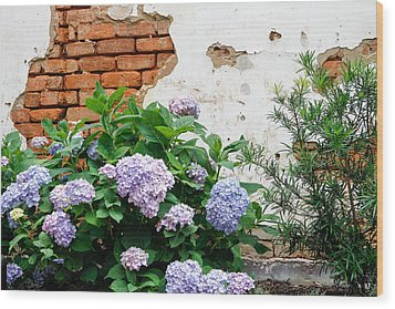 Hydrangea And Bricks Wood Print by Menachem Ganon