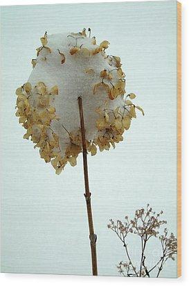 Hydrangea Blossom In Snow Wood Print