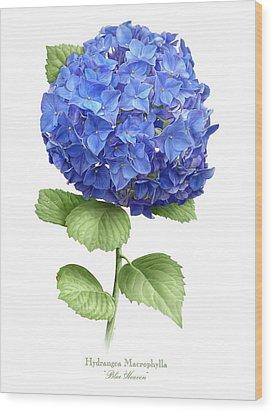 Hydrangea Blue Heaven Wood Print