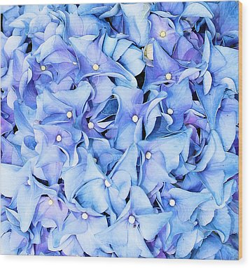 Wood Print featuring the photograph Hydrangea by Kristin Elmquist