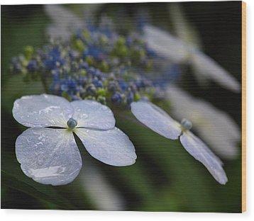 Hydrangea Macrophylla Wood Print by Juergen Roth
