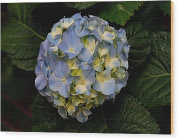 Wood Print featuring the photograph Hydrangea by Marilynne Bull