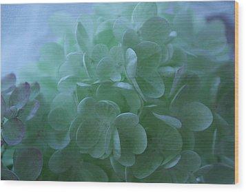 Hydrangea Repose Wood Print by Nancy TeWinkel Lauren