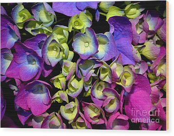 Wood Print featuring the photograph Hydrangea by Vivian Krug Cotton