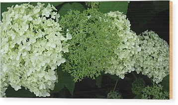 Hydrangeas 2011 Wood Print by Anna Villarreal Garbis