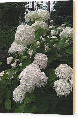 Wood Print featuring the photograph Hydrangeas by Ferrel Cordle