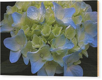 Wood Print featuring the photograph Hydrangeas Flowers by Juergen Roth