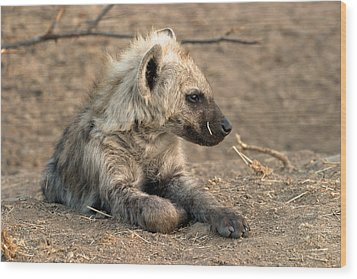 Wood Print featuring the photograph Hyena by Riana Van Staden
