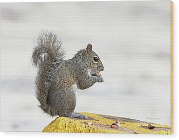 Wood Print featuring the photograph I Have My Nuts by Deborah Benoit