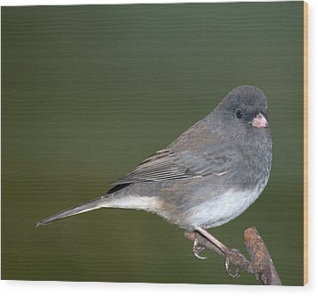 I Junco Wood Print by Richard Oliver