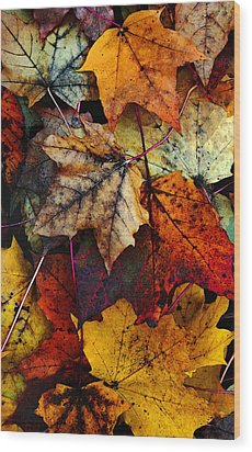 I Love Fall 2 Wood Print by Joanne Coyle