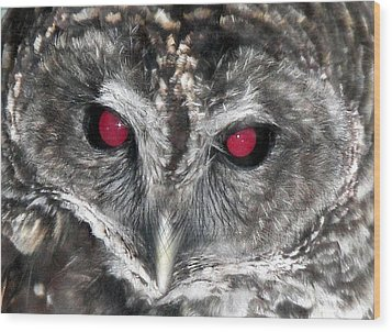 I See You Wood Print by Karen Wiles