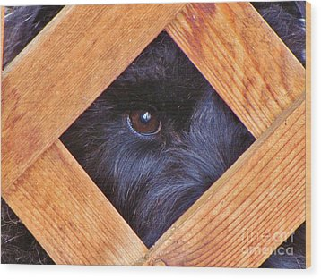Look Closely  Wood Print by Michele Penner