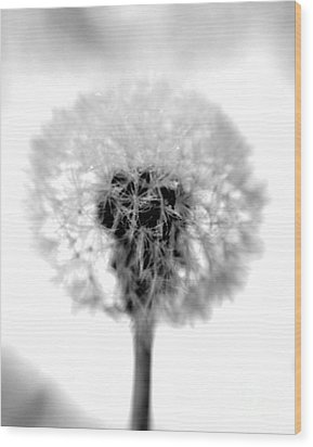 I Wish In Black And White Wood Print by Valerie Fuqua
