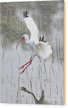 Ibis Soft Water Landing Wood Print