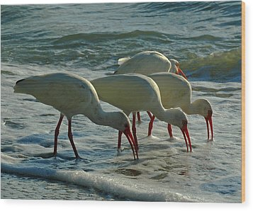 Ibises At Bowman Wood Print by Juergen Roth
